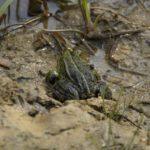 Von Kröten und Sumpf